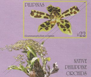 Native Philippine Orchids II