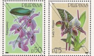 Native Philippine Orchids VI