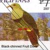Black-chinned Fruit Dove (Ptilinopus leclancheri)