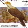 Grey Imperial – Pigeon (Ducula pickeringii)