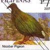 Various Species of Pigeon