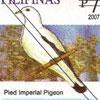 Red Turtle Dove (Streptopelia tranquebarica)